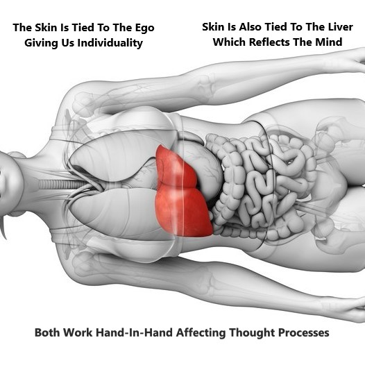 Liver Skin Connection